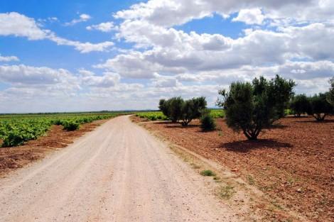 Caminos de nuestra tierra